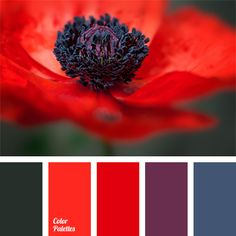 Color Palette No. Red Color Schemes, Red Colour Palette, Purple Color Palettes, Color Combos, Design Seeds, Kitchen Wall Colors, Red Kitchen, Bathroom Colors, Bathroom Ideas