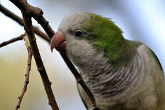 These ten vegetables will improve your pet bird's diet: Ten Super Vegetables For Your Parrots!