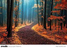 büyüleyici sonbahar manzaraları - Google'da Ara