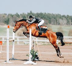 Love level competition/eventing SJ phase
