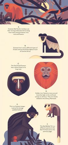 Mad About Monkeys: A Loving Illustrated Encyclopedia of Weird and Wonderful Kindred Creatures | Brain Pickings