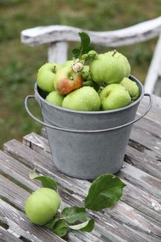 ... country green green country green apples fresh apples apple farm apple