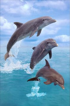 Sea life Dolphin painting for sale, this painting is available as handmade reproduction. Shop for Sea life Dolphin painting and frame at a discount of off. Water Animals, Animals And Pets, Beautiful Creatures, Animals Beautiful, Dolphin Painting, Dolphin Photos, Bottlenose Dolphin, Delphine, Ocean Creatures