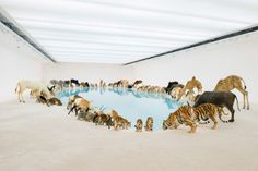 """""""Heritage,"""" a large-scale installation of 99 replicas of wild animals drinking from a pool of blue water. Created by artist Cai Guo-Qiang for the exhibition Falling Back to Earth, at Queensland Art Gallery, in Australia. Art Gallery, Gallery Of Modern Art, Gallery Walls, Galerie D'art Moderne, Cai Guo Qiang, Grandeur Nature, Claude Monet, Vincent Van Gogh, Installation Art"""