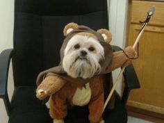 Ewok real #humorgeek =P