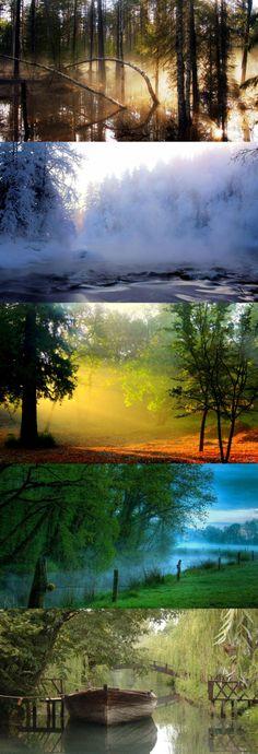 Swamp forest morning mist