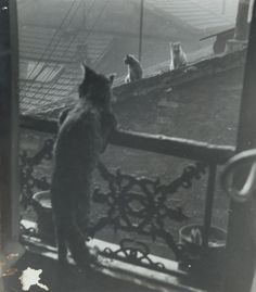 Réunion de chats, 1948 , Edouard Boubat. French (1923 - 1999)
