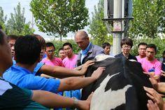 VikingGenetics in China doing AI training