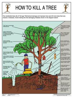 Good info on what not to do to your trees!!! 1. No mulch volcanos please!