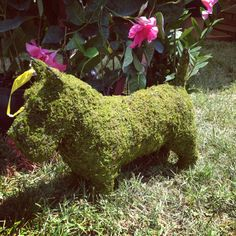 Scotty Terrier topiary
