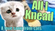 Cat Parody Song - All I Need / Knead (Is the Air That I Breathe - The Ho... Parody Songs, Cat Paws, Cat Gif, Cool Cats, Love Songs, Cats And Kittens, Breathe, Singing, Cute Animals