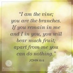 I am the vine; you are the branches. John 15:5