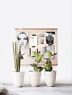 1–10: plants and displays
