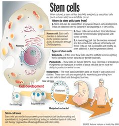 Umbilical cords blood banking for stem cells therapy | B4Tea.com