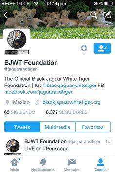 porquemeamo - BLACK JAGUAR WHITE TIGER FOUNDATION