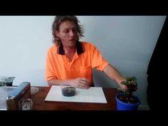 Easy rex begonia leaf propagation - YouTube