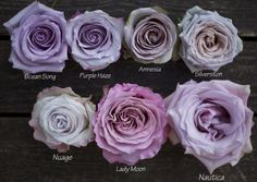 Color Study of Lavender and Purple Roses by Harvest Roses - http://www.harvestwholesale.com  Ocean Song, Purple Haze, Amnesia, Silverston - Nuage, Lady Moon, Nautica