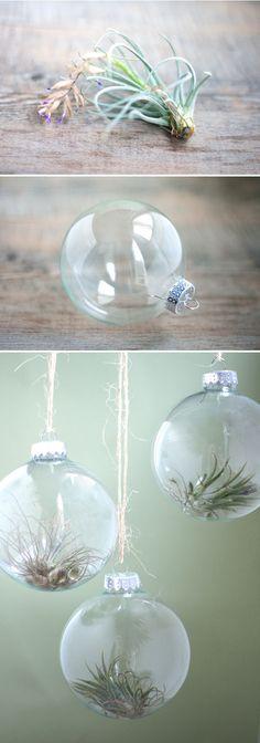 Ornaments, Kitchen windows and Terrarium
