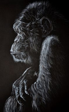 ...another animal drawing on black paper : a 'thinking' chimpanzee