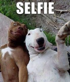 visit www.amazingdogtales.com for the best funny dog joke pics,inspirational dog stories and dog news.... (29) Twitter