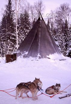 Finland - Lapland: kota, a Sami tent and huskies (photo by F. Husky Photos, Finland Travel, Vernacular Architecture, Urban Life, Travel Images, Norway, Tent, Northern Lights, History