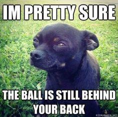 Koira vainuaa huijauksen