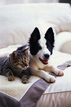 (≡•̀ꈊ•́≡) ▼・.̫・▼  #neko #cat #dog