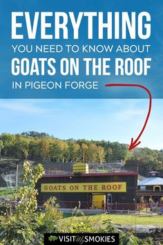 Visit My Smokies has your guide of everything you need to know about Goats on the Roof in Pigeon Forge, from what you can do to location information. Pigeon Forge Tennessee Cabins, Gatlinburg Tennessee, Tennessee Vacation, Pigeon Forge Tn, Gatlinburg Vacation, Vacation Trips, Alaska Travel, Alaska Cruise, Mountain Vacations