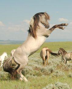 Le Mustang Espagnol - Un Sulphur Springs qui se cabre