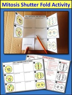 Mitosis Interactive Notebook – Three Hands On Activities for INB - tecnology World Science Cells, Science Biology, Teaching Biology, Life Science, Biology Interactive Notebook, Science Notebooks, Interactive Notebooks, Mitosis, High School Biology