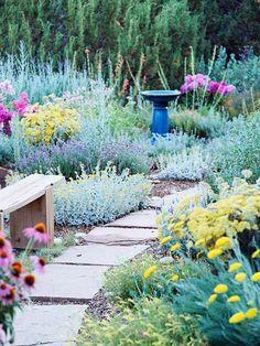 Compatible drought plants - beautiful garden ideas