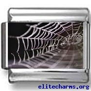 Photo Charms, Black Backgrounds, Spider, Scary, Charmed, Image, Spiders