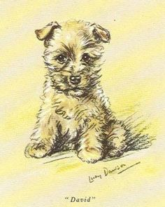 Cairn Terrier Puppy - MATTED Dog Print - Lucy Dawson | Collectibles, Animals, Dogs | eBay!