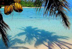 Coconut palms...tropical shadows