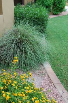 Ornamental Grass - Ornamental Grass