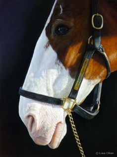 """Clydesdale"" by Lisa Ober Soft pastel on sanded pastel paper http://www.lisaober.com/"