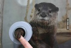 There is an aquarium where you can shake hands with otters. This is now on my bucket list.  OMG!  I must go to Japan!