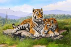 Home decoration painting Tigers grass stones lie down art Silk Fabric Poster Print  AT102. Yesterday's price: US $6.81 (5.58 EUR). Today's price: US $6.81 (5.63 EUR). Discount: 38%.