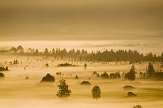 Germany, Bavaria, Murnauer Moos, morning fog