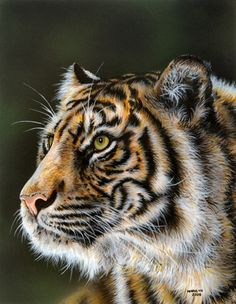 Emerald Regard - Tiger painting by Marilyn Barkhouse - not sure of the medium.