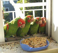 Baby Parrots.