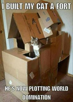 Funny Cat Pictures - 34 Pics – Funnyfoto | Funny Pictures - Videos - Gifs - Page 10 #FunnyCatGifs
