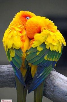 love birds..