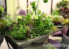 Nordiska Trädgårdar 2016, Tukholma. Plants, Plant, Planets