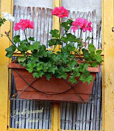 In & around my house : My summer ! My House, Garden, Plants, Summer, Garten, Summer Time, Lawn And Garden, Gardens, Plant