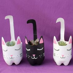 Beautiful kittens with echeverias in Yollotli Cactus Reuse Plastic Bottles, Plastic Bottle Crafts, Diy Bottle, Recycled Bottles, Soda Bottle Crafts, Soda Bottles, Diy Home Crafts, Garden Crafts, Fun Crafts