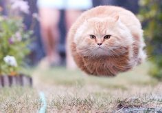 That's the most terrifying flying cat I've personally ever seen....