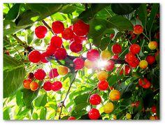 Képek egy blogból Fruit, Food, Essen, Meals, Yemek, Eten