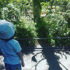 Wir holen heute unseren Hochzeitstag nach gehen in den Zoo und Essen. So viel Zeit hatten wir schon lange nicht mehr. Da die Kita von K2 zu ist haben wir mehr Kinder als erwartet dabei ist aber trotzdem schön. #lebenmitkindern #familienblog #elternblog #mamablog #papablog #zooberlin