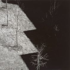 Harry Callahan Ansley Park, Atlanta, 1992 gelatin silver print overall (image): 15.72 x 15.72 cm (6 3/16 x 6 3/16 in.) National Gallery of Art, Washington, Gift of Susan and Peter MacGill © Estate of Harry Callahan, courtesy Pace/MacGill Gallery, New York